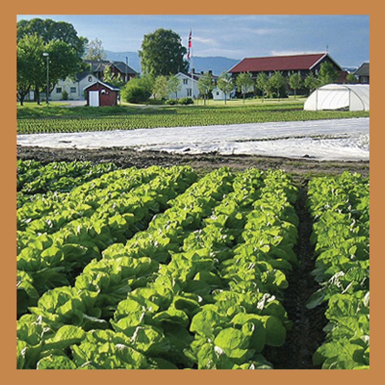 Utsnitt fra Gilhus Gårds åkerlandskap med gårdshus i bakgrunnen